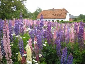 sommerhus til leje på Ærø