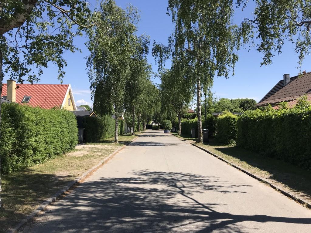 Birkevang (6)